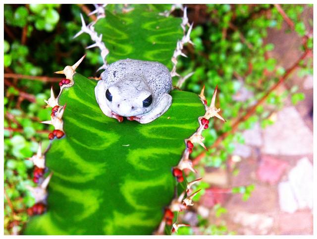 frog in Kenya